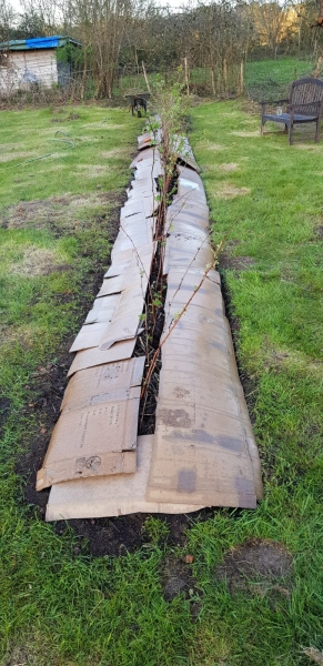 13 metre long raspberry bed